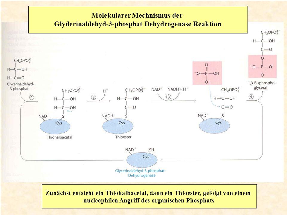 Molekularer Mechnismus der