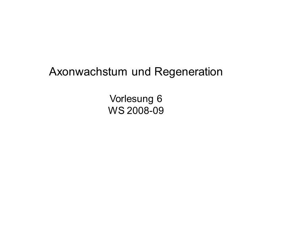 Axonwachstum und Regeneration