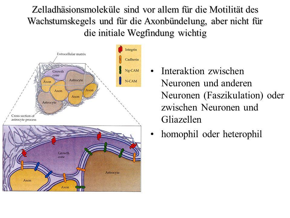 homophil oder heterophil