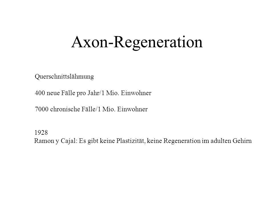 Axon-Regeneration Querschnittslähmung