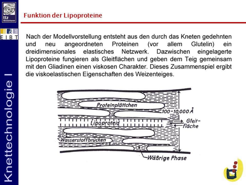 Funktion der Lipoproteine