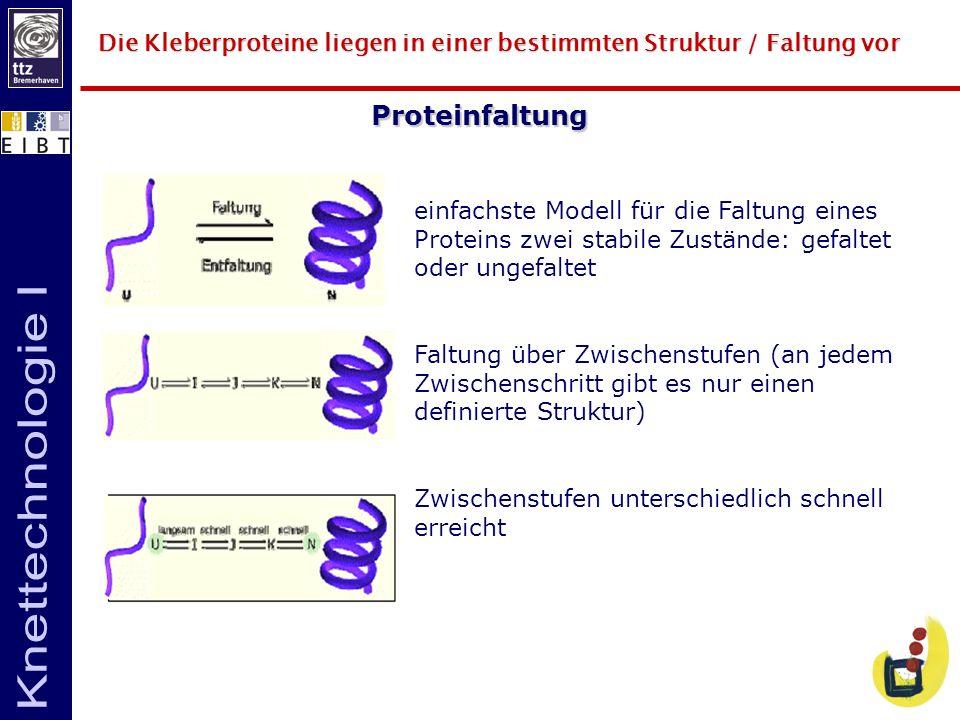 Die Kleberproteine liegen in einer bestimmten Struktur / Faltung vor