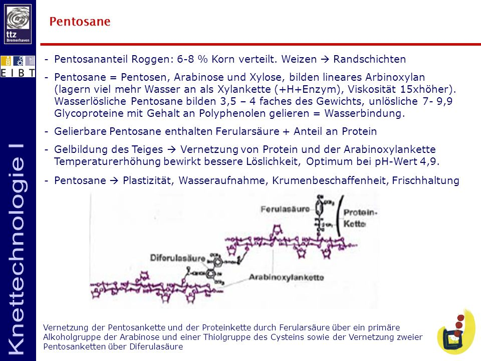 Pentosane Pentosananteil Roggen: 6-8 % Korn verteilt. Weizen  Randschichten.