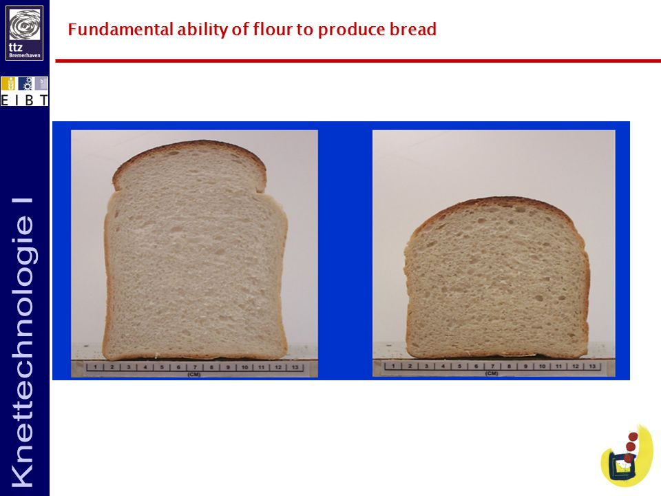 Fundamental ability of flour to produce bread