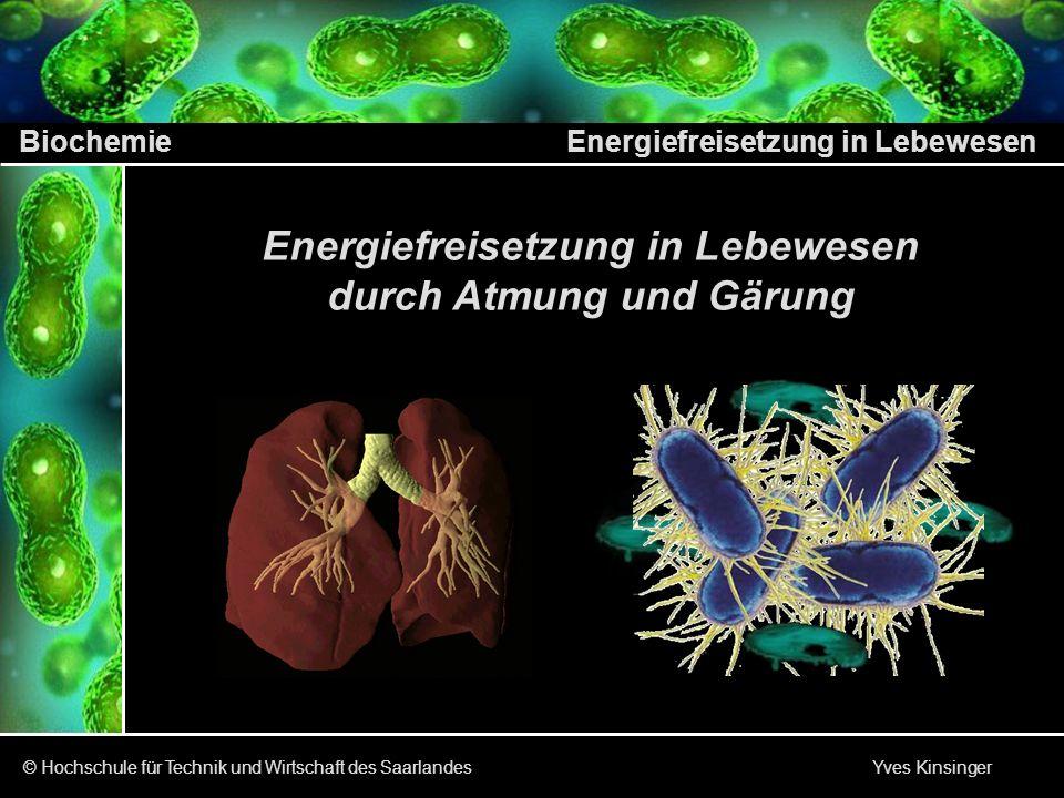 Energiefreisetzung in Lebewesen durch Atmung und Gärung
