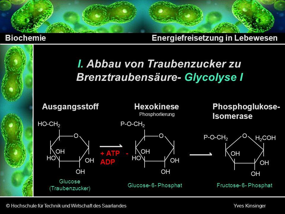 Abbau von Traubenzucker zu Brenztraubensäure- Glycolyse I