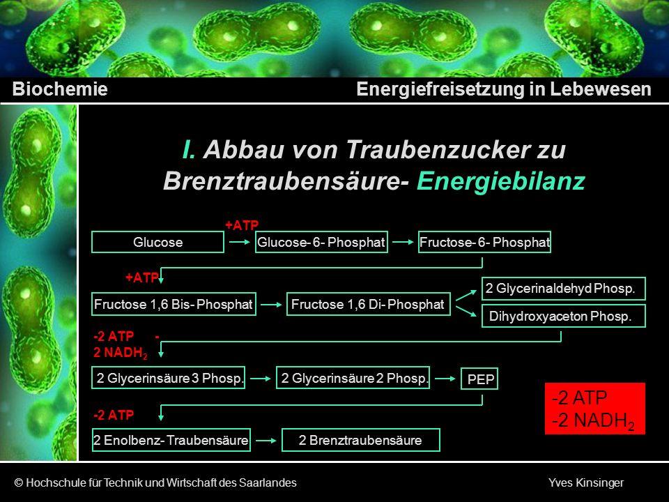 Abbau von Traubenzucker zu Brenztraubensäure- Energiebilanz