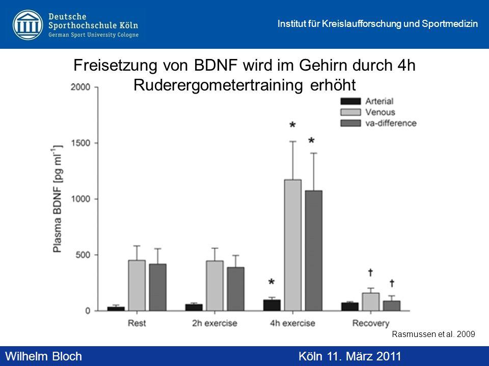 Freisetzung von BDNF wird im Gehirn durch 4h Ruderergometertraining erhöht