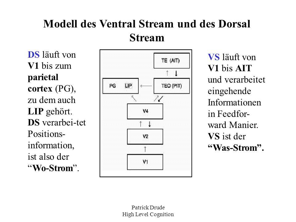 Modell des Ventral Stream und des Dorsal Stream