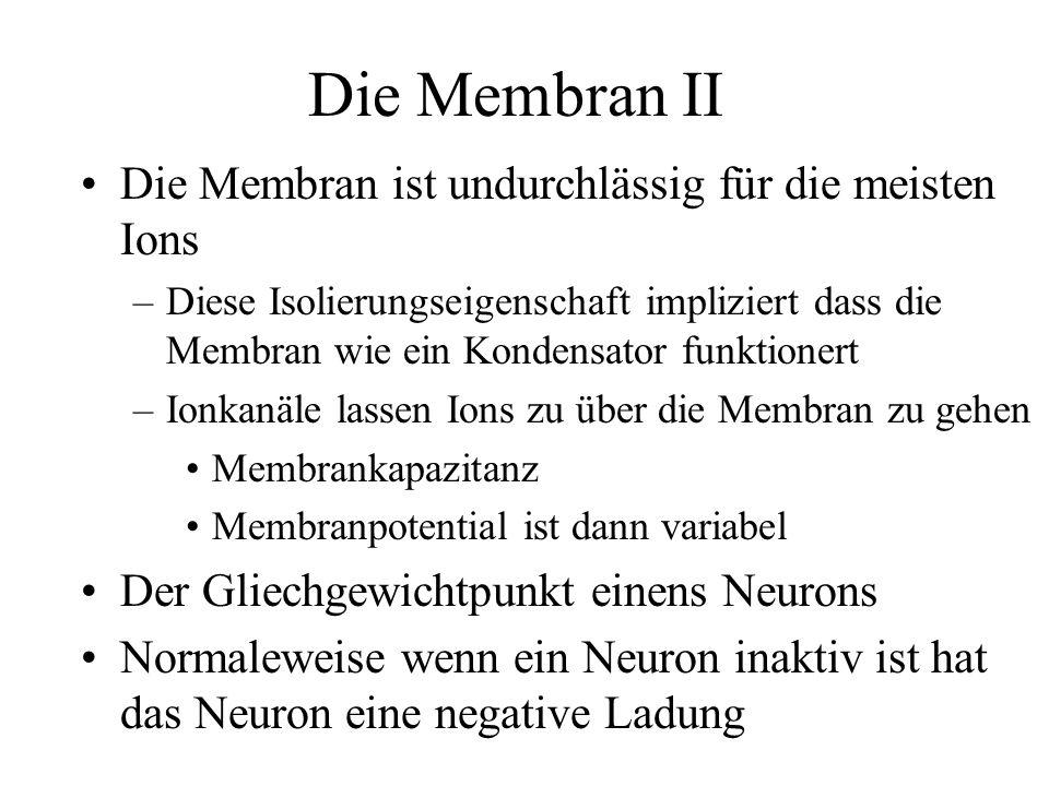 Die Membran II Die Membran ist undurchlässig für die meisten Ions