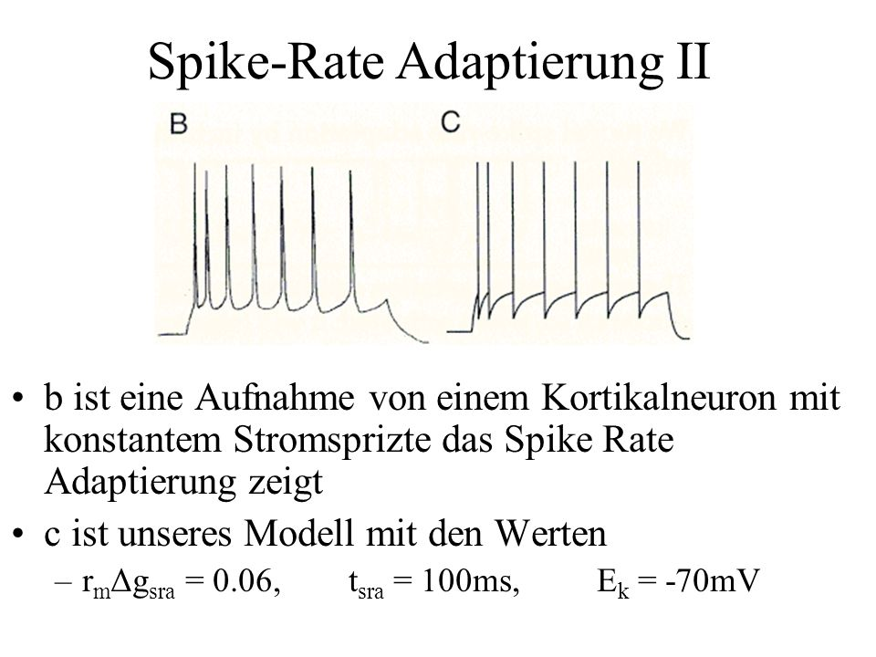 Spike-Rate Adaptierung II