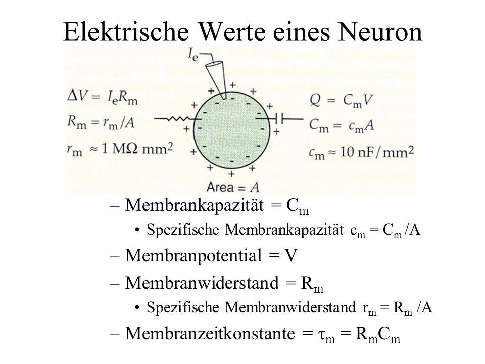 Elektrische Werte eines Neuron