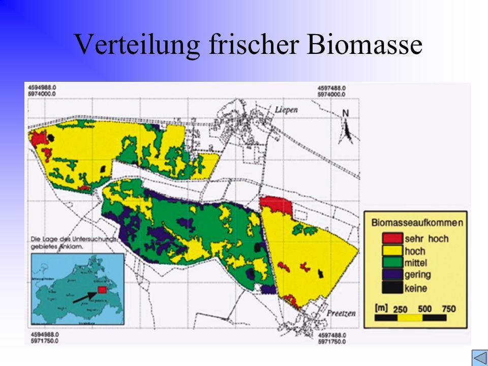 Verteilung frischer Biomasse