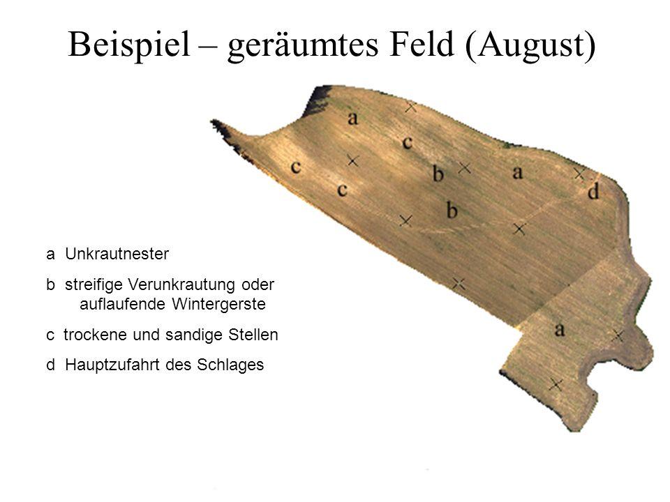 Beispiel – geräumtes Feld (August)