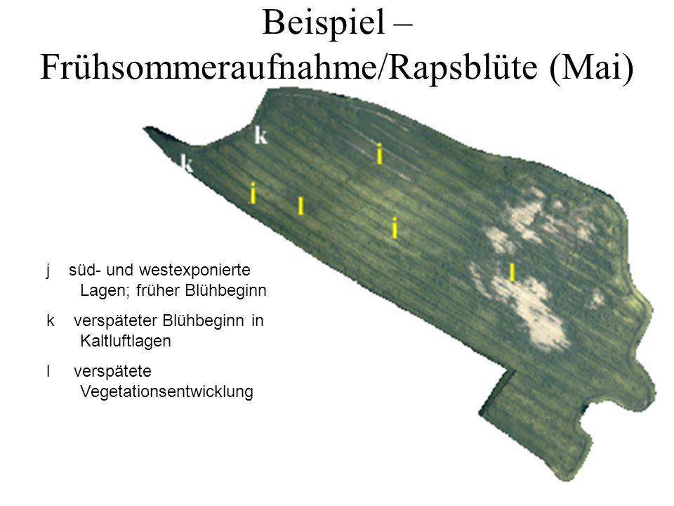 Beispiel – Frühsommeraufnahme/Rapsblüte (Mai)