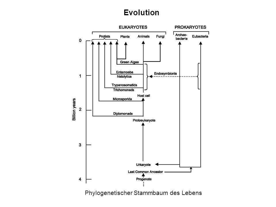 Evolution Phylogenetischer Stammbaum des Lebens