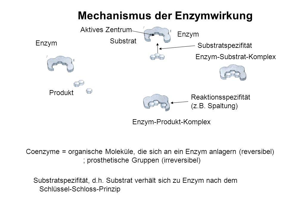 Mechanismus der Enzymwirkung