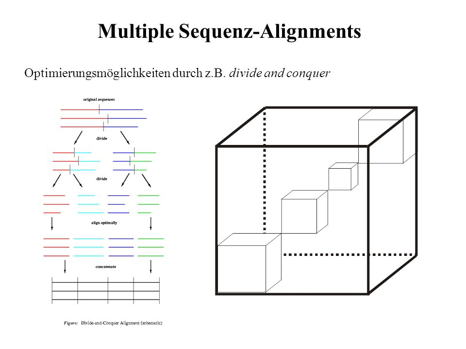 Multiple Sequenz-Alignments