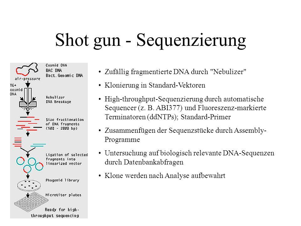 Shot gun - Sequenzierung