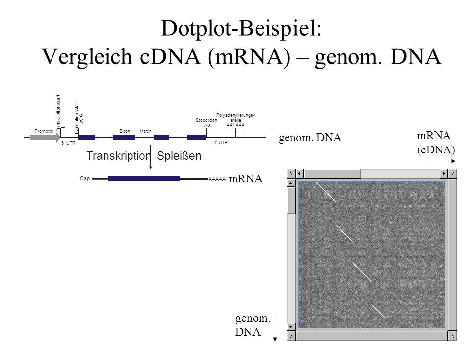 Dotplot-Beispiel: Vergleich cDNA (mRNA) – genom. DNA
