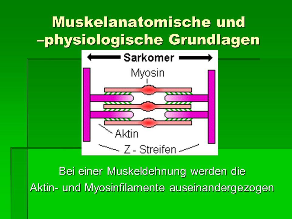 Muskelanatomische und –physiologische Grundlagen
