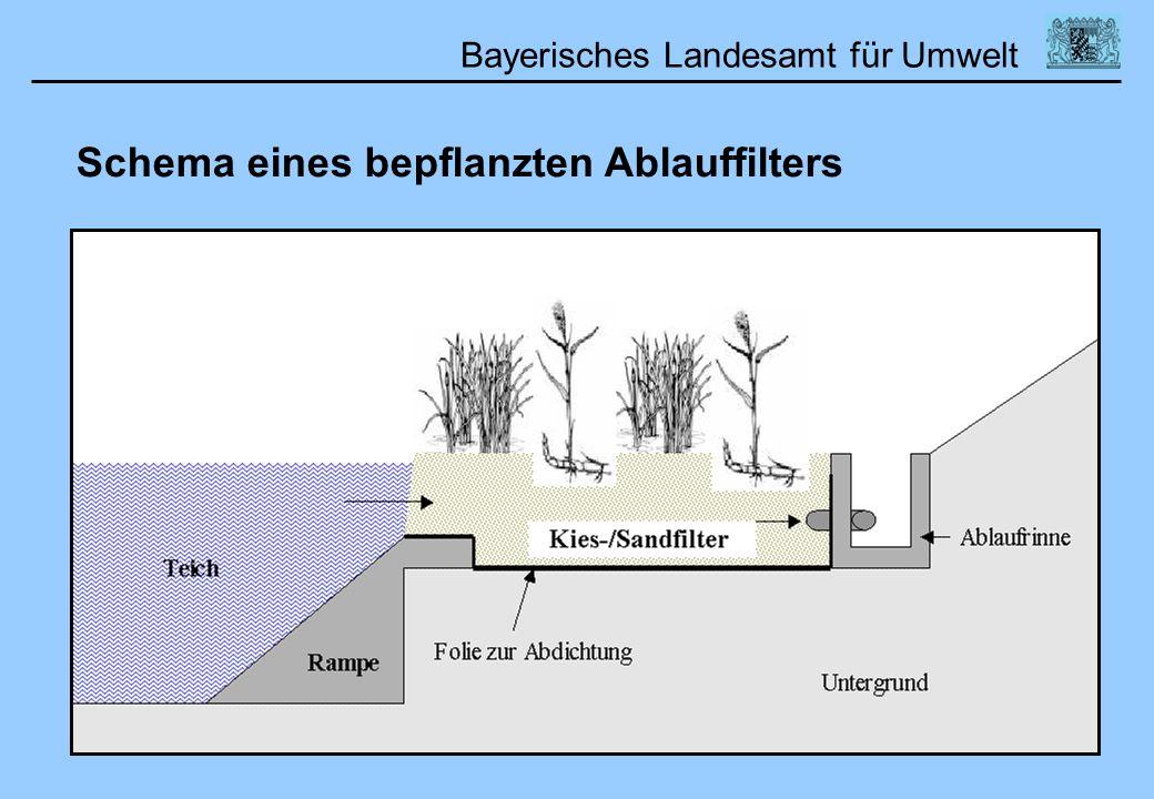 Schema eines bepflanzten Ablauffilters
