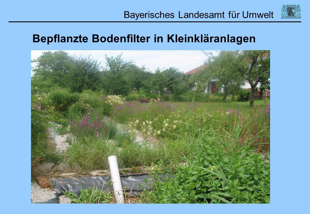 Bepflanzte Bodenfilter in Kleinkläranlagen