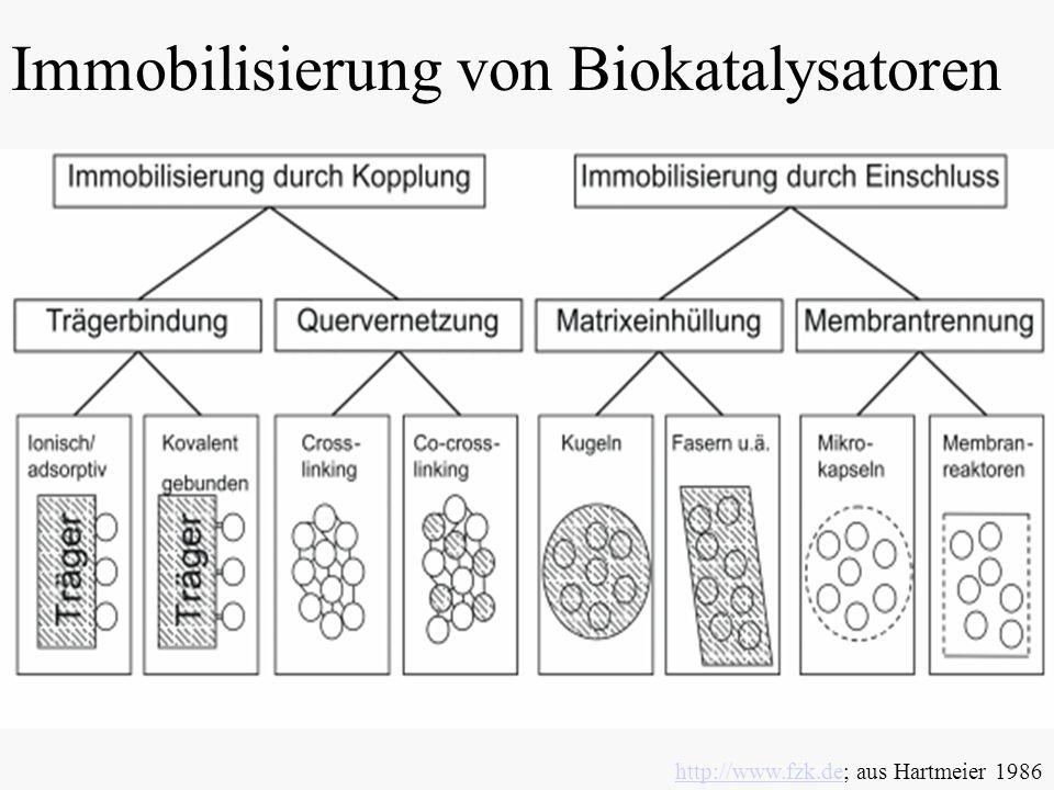Immobilisierung von Biokatalysatoren