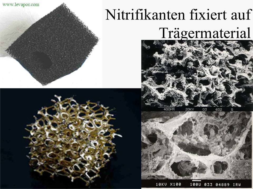 Nitrifikanten fixiert auf Trägermaterial