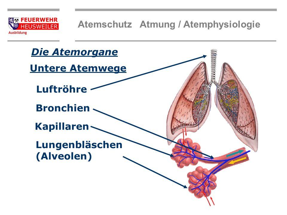 Beste Funktion Der Bronchien Ideen - Menschliche Anatomie Bilder ...