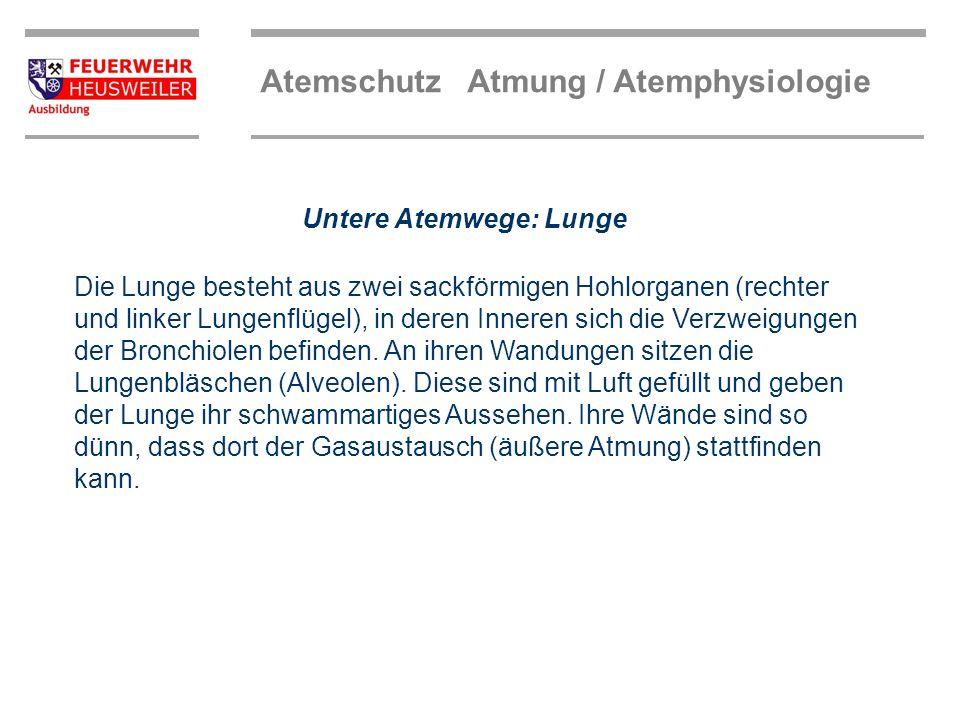 Untere Atemwege: Lunge
