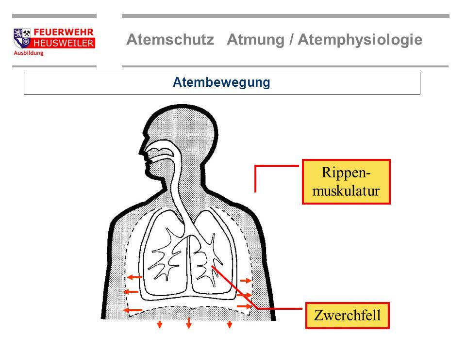 Atembewegung Rippen-muskulatur Zwerchfell