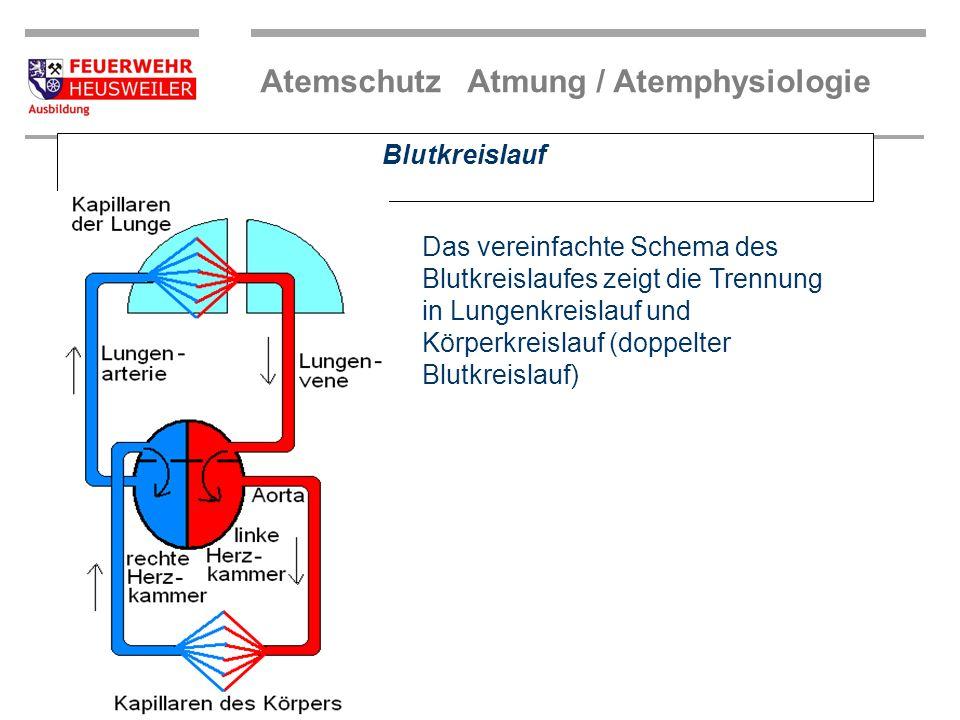 Blutkreislauf Das vereinfachte Schema des Blutkreislaufes zeigt die Trennung in Lungenkreislauf und Körperkreislauf (doppelter Blutkreislauf)