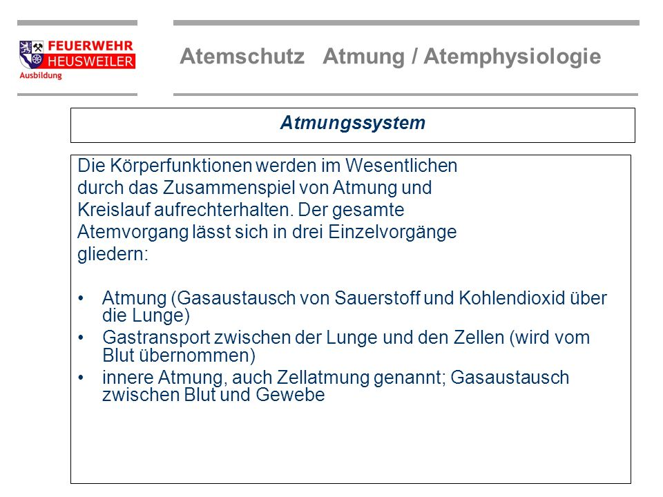 Atemberaubend Anatomie Lunge Atmungssystem Bilder - Anatomie Ideen ...
