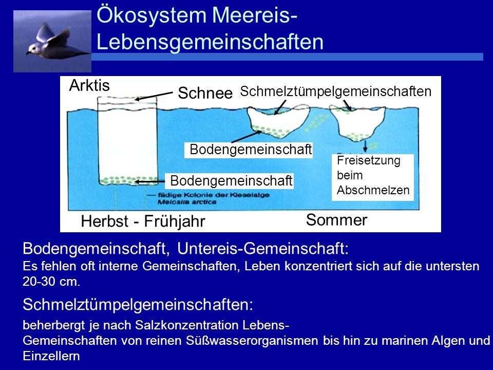 Ökosystem Meereis-Lebensgemeinschaften