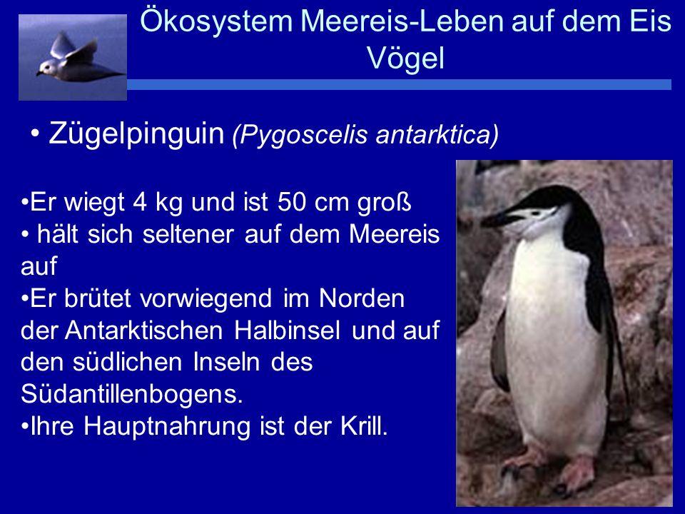 Ökosystem Meereis-Leben auf dem Eis Vögel
