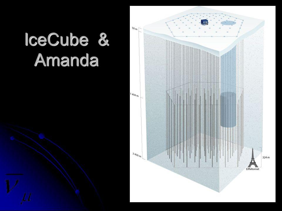 IceCube & Amanda