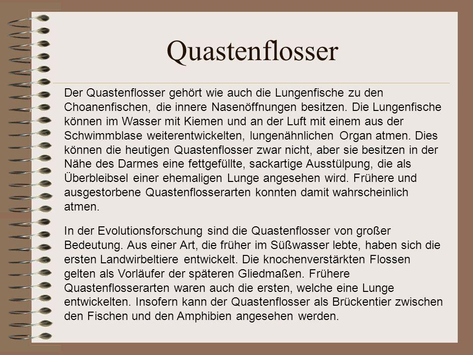 Quastenflosser