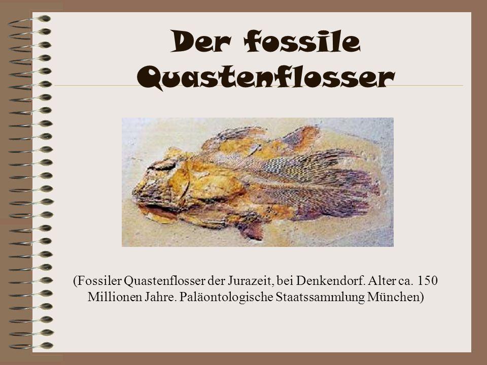 Der fossile Quastenflosser