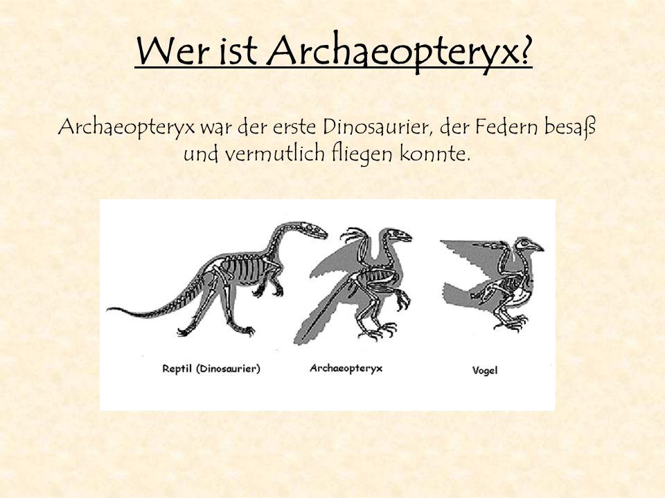 Wer ist Archaeopteryx.