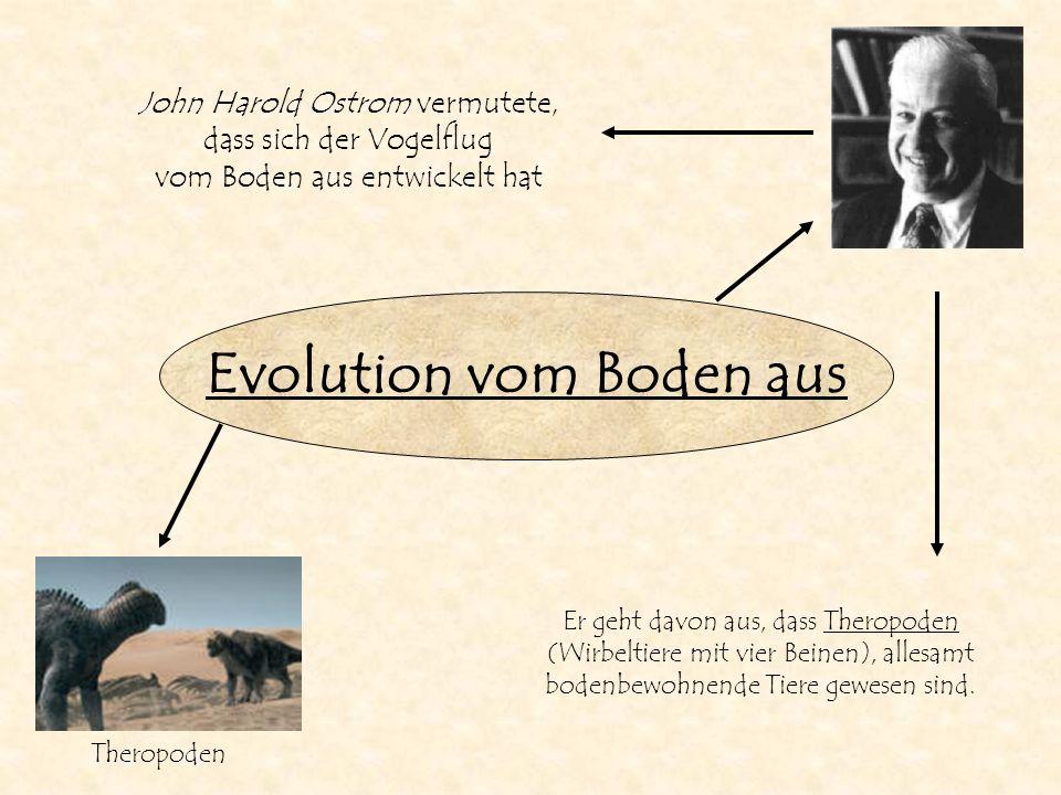 Evolution vom Boden aus