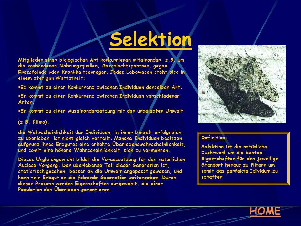 Selektion