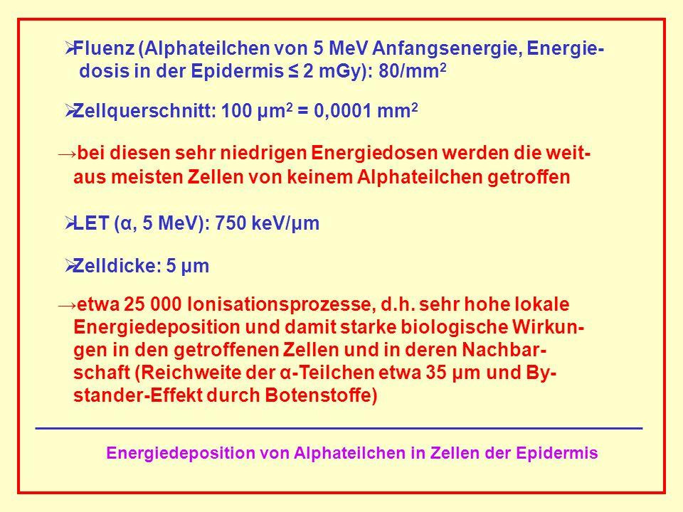 Energiedeposition von Alphateilchen in Zellen der Epidermis