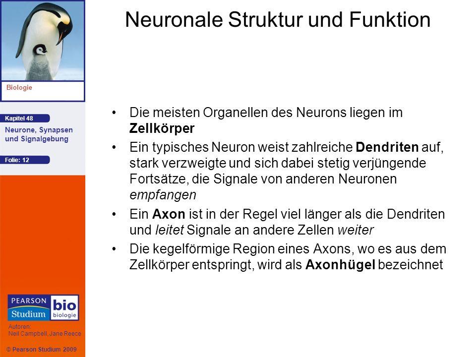 Neuronale Struktur und Funktion