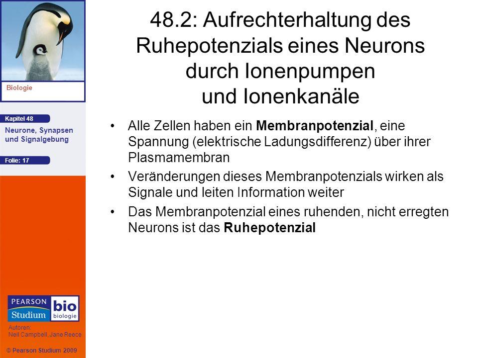 48.2: Aufrechterhaltung des Ruhepotenzials eines Neurons durch Ionenpumpen und Ionenkanäle