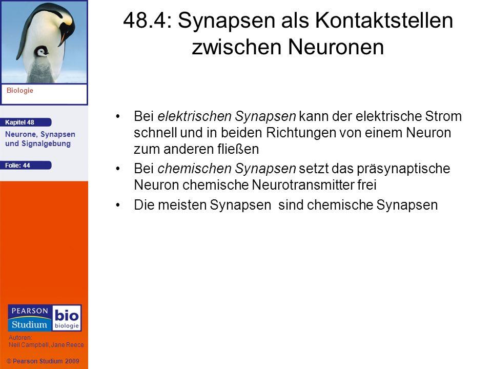 48.4: Synapsen als Kontaktstellen zwischen Neuronen