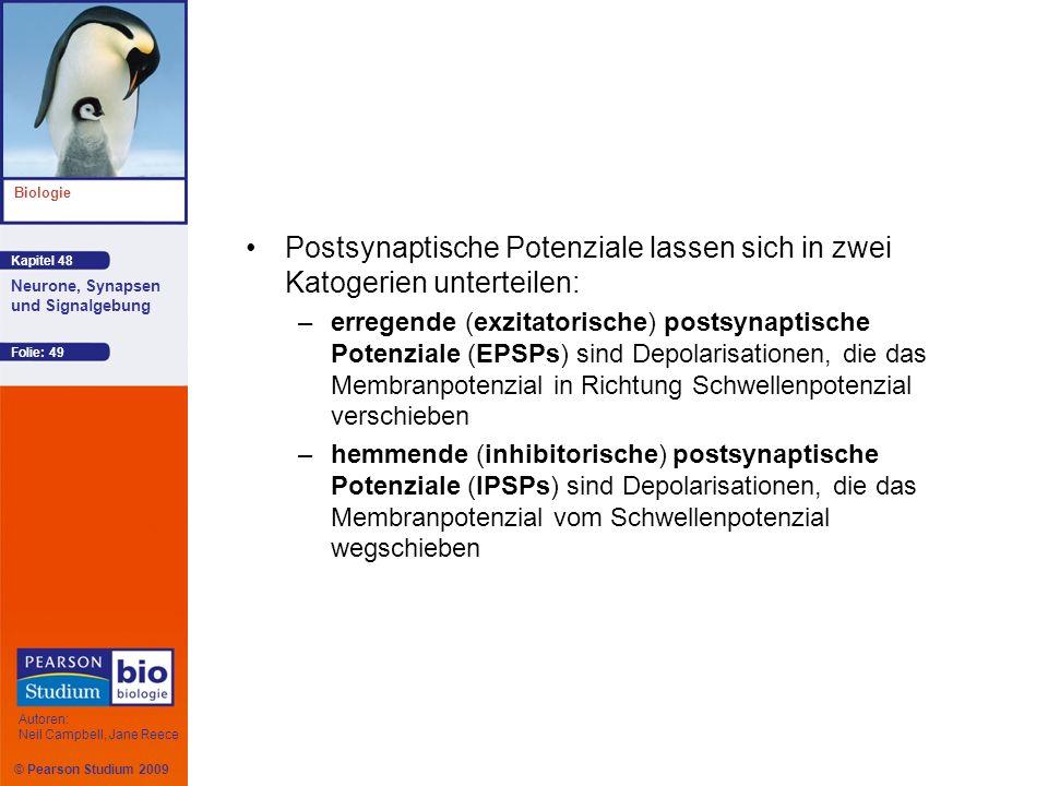 Postsynaptische Potenziale lassen sich in zwei Katogerien unterteilen: