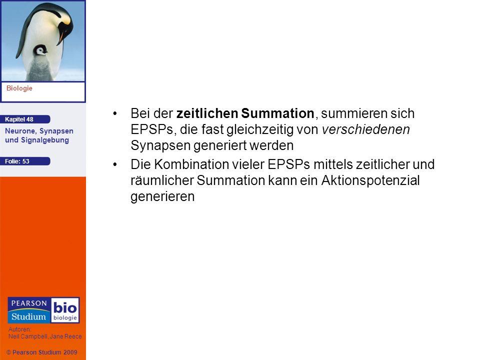 Bei der zeitlichen Summation, summieren sich EPSPs, die fast gleichzeitig von verschiedenen Synapsen generiert werden