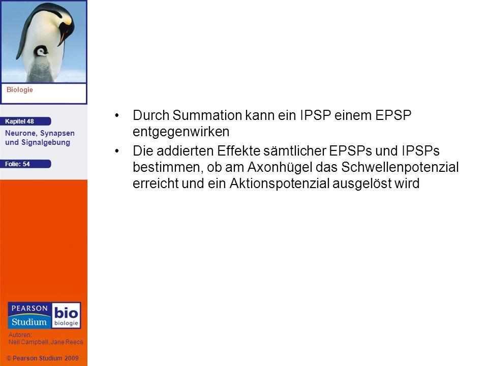 Durch Summation kann ein IPSP einem EPSP entgegenwirken