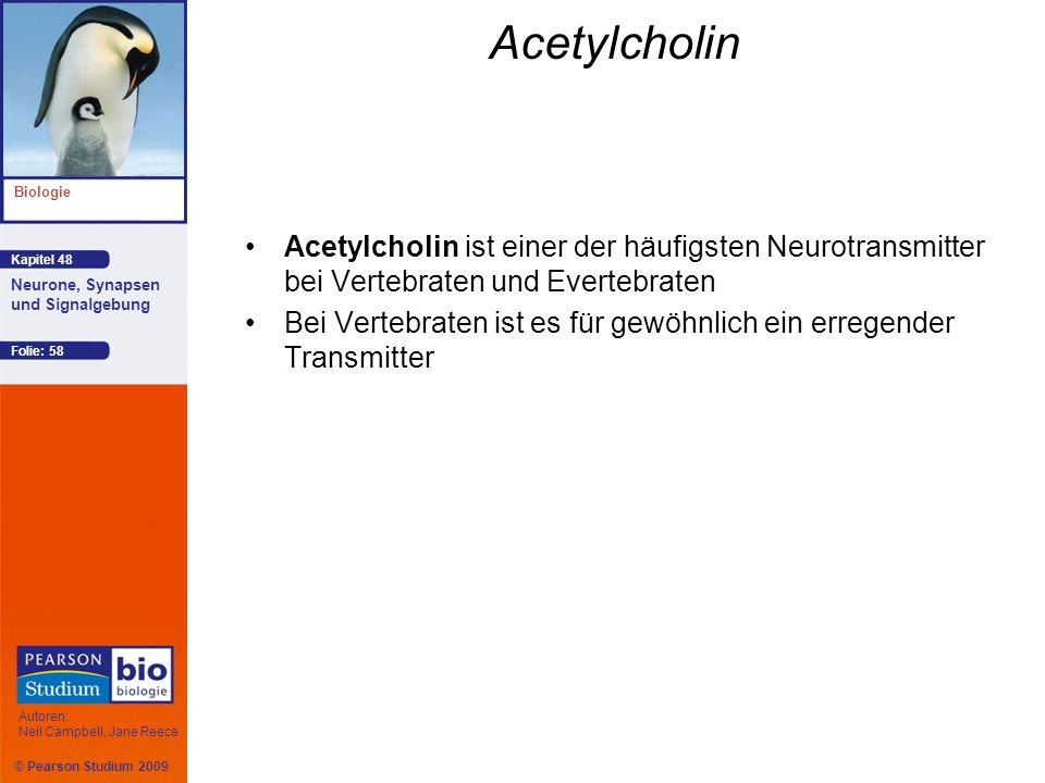 Acetylcholin Acetylcholin ist einer der häufigsten Neurotransmitter bei Vertebraten und Evertebraten.